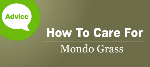How To Fertilize, Prune And Water Mondo Grass